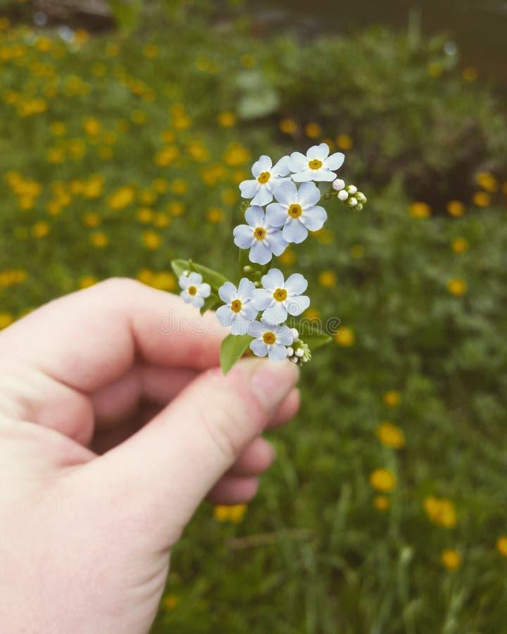 Belleza simplista fotos de archivo