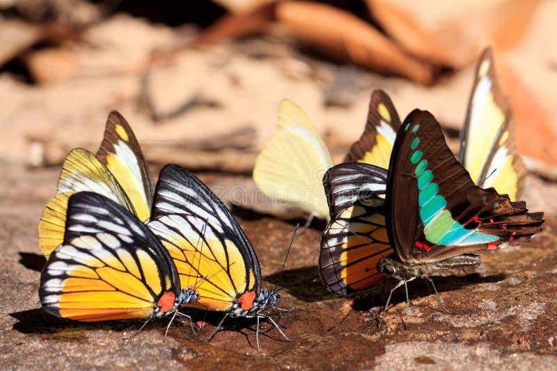 Belleza y mariposa colorida imagen de archivo