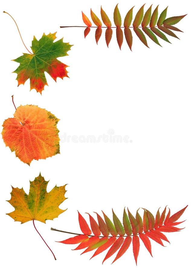 Bellezas del otoño foto de archivo