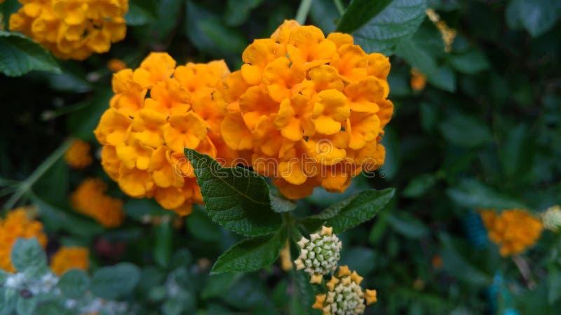 Bellezza arancio fotografie stock libere da diritti