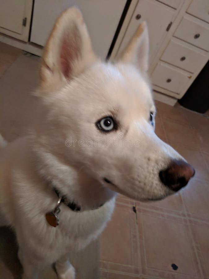Bellezza del cucciolo fotografia stock