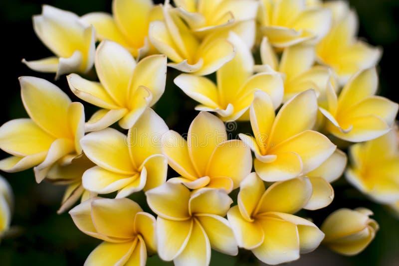 bellezza del fiore fotografia stock libera da diritti