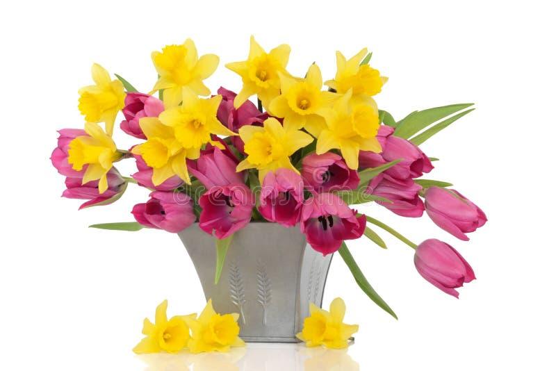 Bellezza del fiore della sorgente fotografia stock