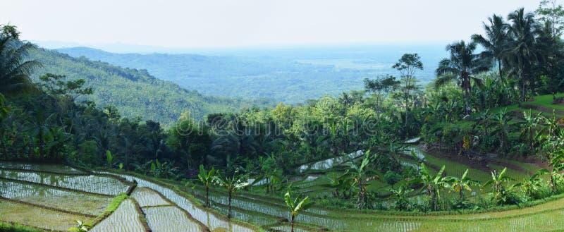 Bellezza del paesaggio di risaia di paesaggio fotografie stock