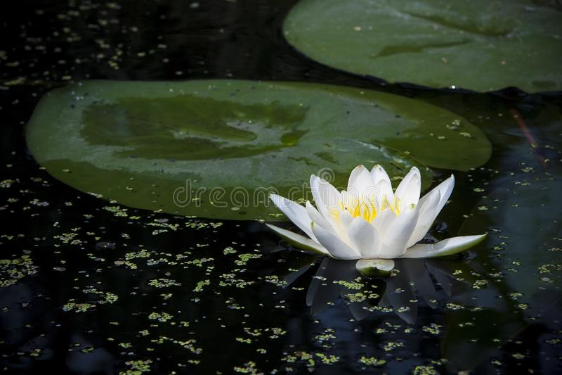 Bellezza dell'acqua immagine stock libera da diritti