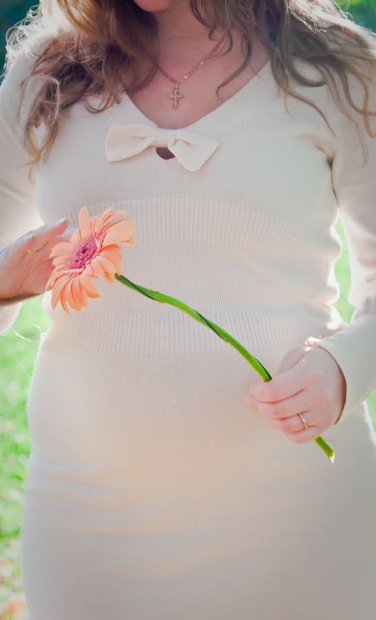 Bellezza della gravidanza fotografia stock