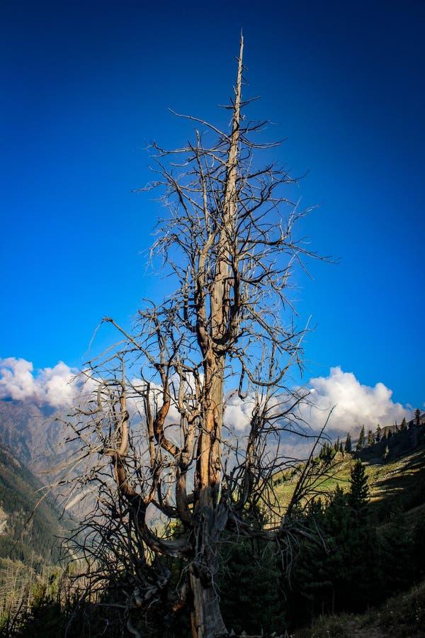 Bellezza della natura di Himachal Pradesh, India immagini stock