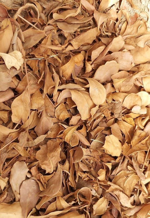 Bellezza della natura foglie asciutte nell'all'aperto fotografia stock libera da diritti