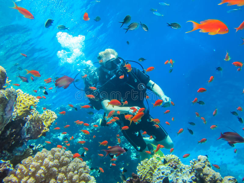 Bellezza della natura selvaggia del mare Tuffandosi nel Mar Rosso fotografia stock libera da diritti