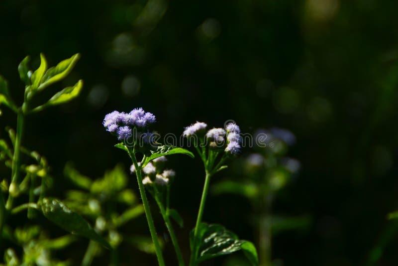 Bellezza delle piante selvatiche fotografie stock libere da diritti