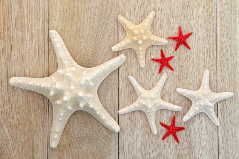 Bellezza delle stelle marine immagini stock libere da diritti
