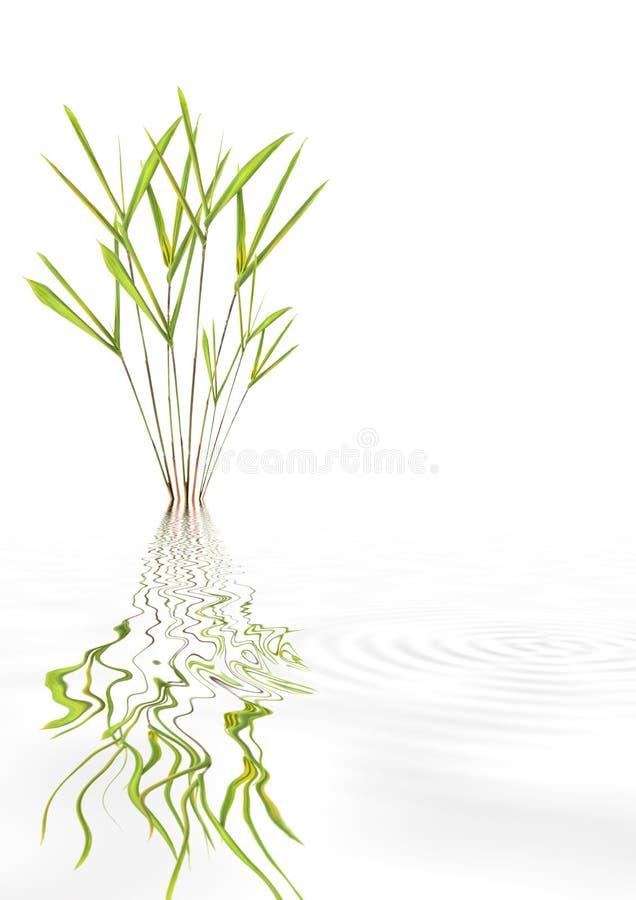 Bellezza di bambù del foglio fotografie stock libere da diritti