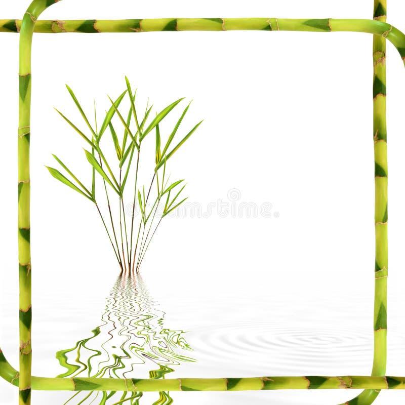 Bellezza di bambù del foglio immagini stock