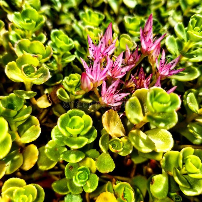 Bellezza di fantasia del giardino della natura di estate del fiore immagine stock libera da diritti