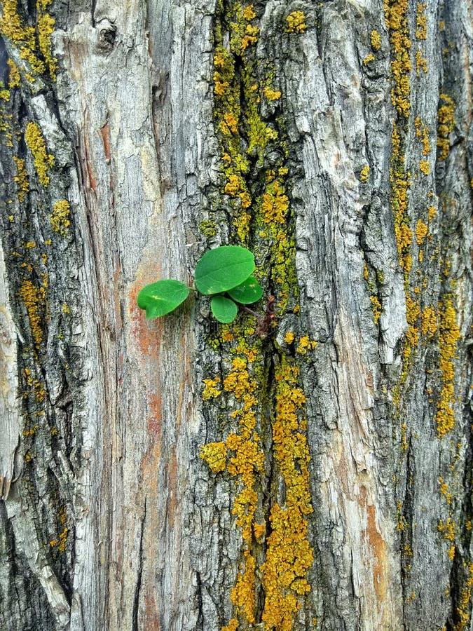 Bellezza di legni fotografia stock