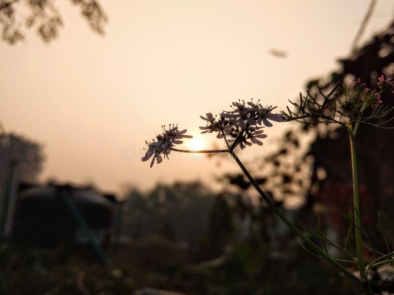 Bellezza di mattina fotografia stock libera da diritti