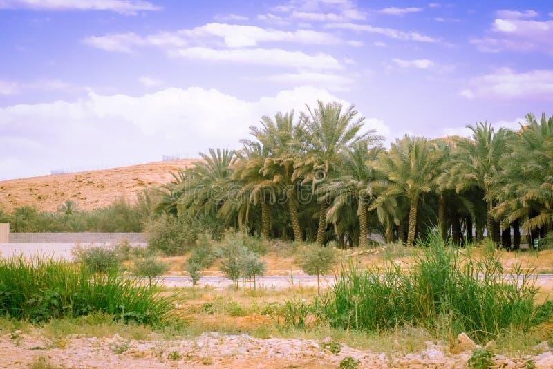 Bellezza di paesaggio con le palme e le piante fotografie stock libere da diritti