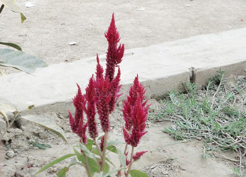 Bellezza di una pianta fotografie stock