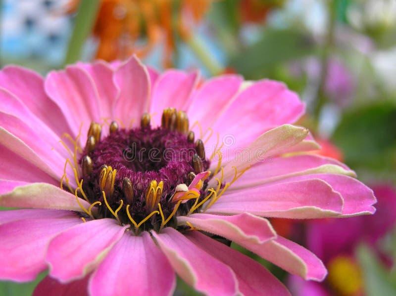 Download Bellezza esotica fotografia stock. Immagine di grande, estate - 218732