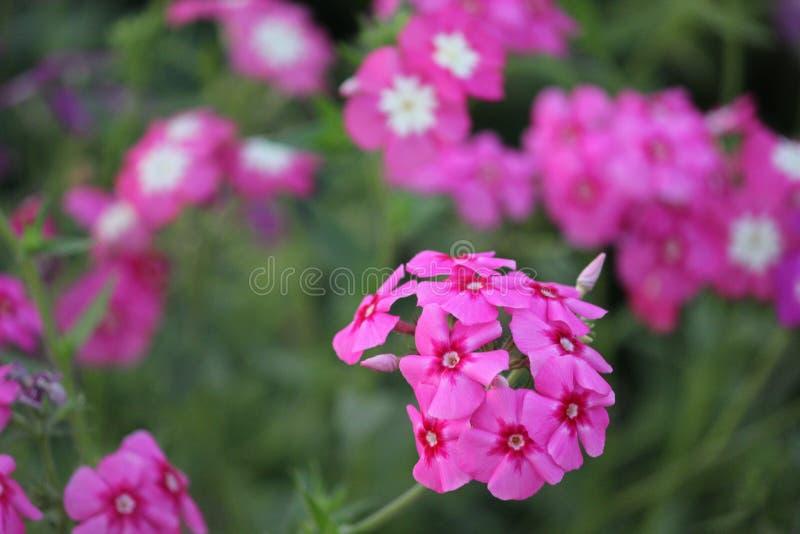 Bellezza Flora Flower fotografia stock