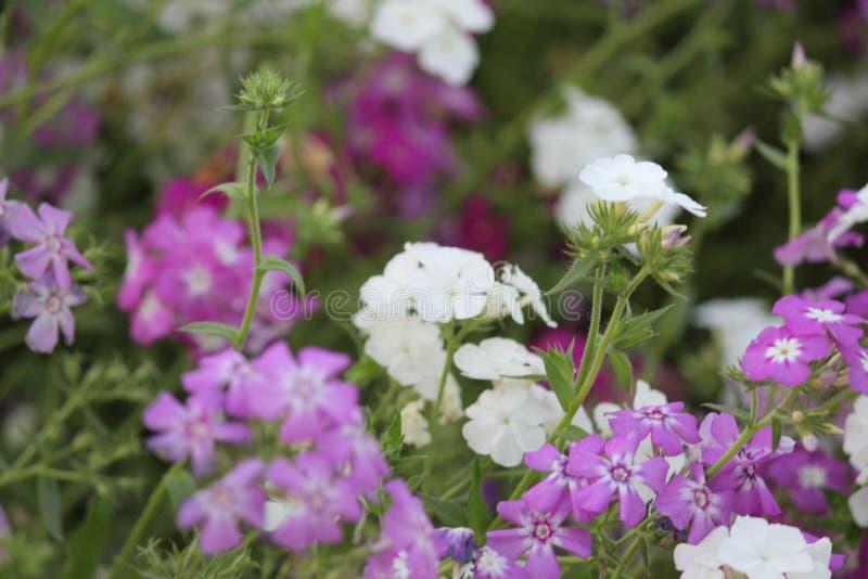 Bellezza Flora Flower fotografie stock