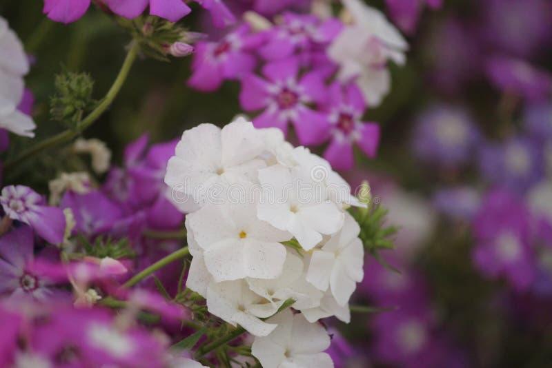 Bellezza Flora Flower fotografie stock libere da diritti