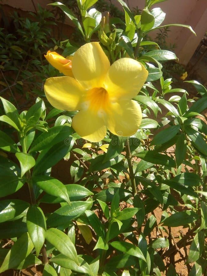 Bellezza gialla immagine stock