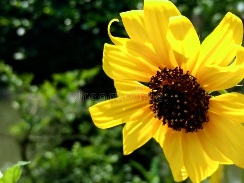 Bellezza gialla immagini stock libere da diritti