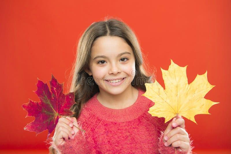 Bellezza naturale Buona stagione autunnale Rosso o giallo Cambio stagionale Colori magici Autunno straordinario Piccola tenda per immagine stock
