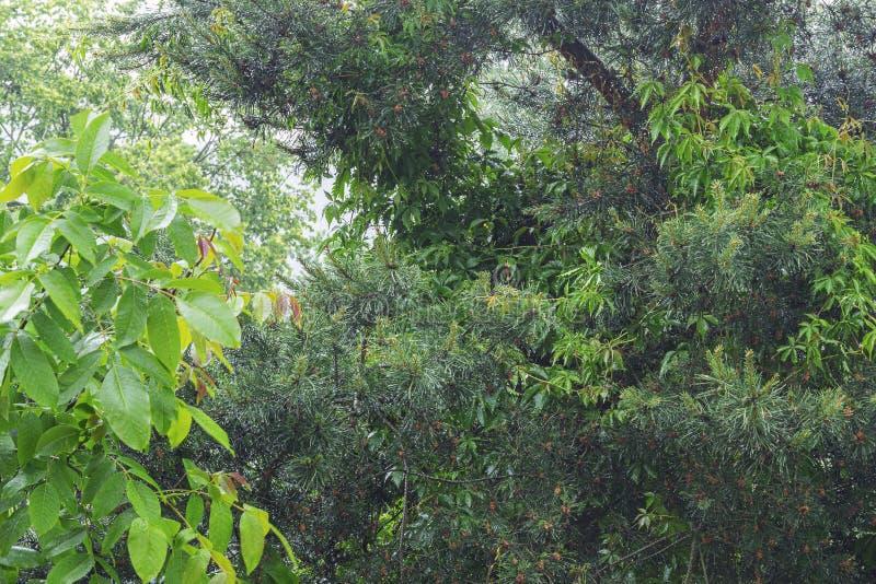 Bellezza naturale della foresta dopo pioggia immagini stock libere da diritti