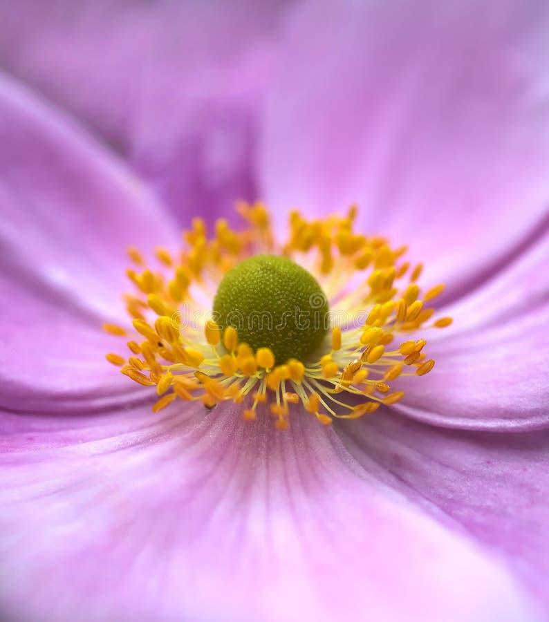 Bellezza naturale - flusso del primo piano fotografia stock libera da diritti