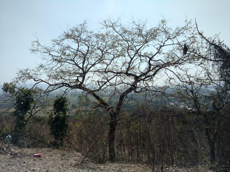 Bellezza naturale in foresta immagine stock libera da diritti