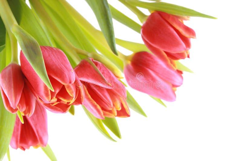 Bellezza nel colore rosso immagini stock libere da diritti
