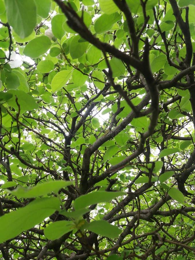 Bellezza verde della natura fotografie stock libere da diritti