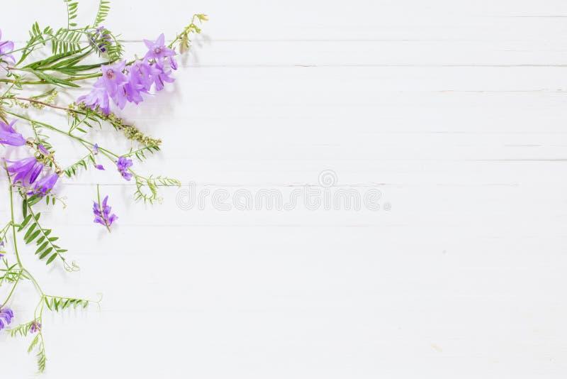 Bellflower en el fondo de madera blanco foto de archivo
