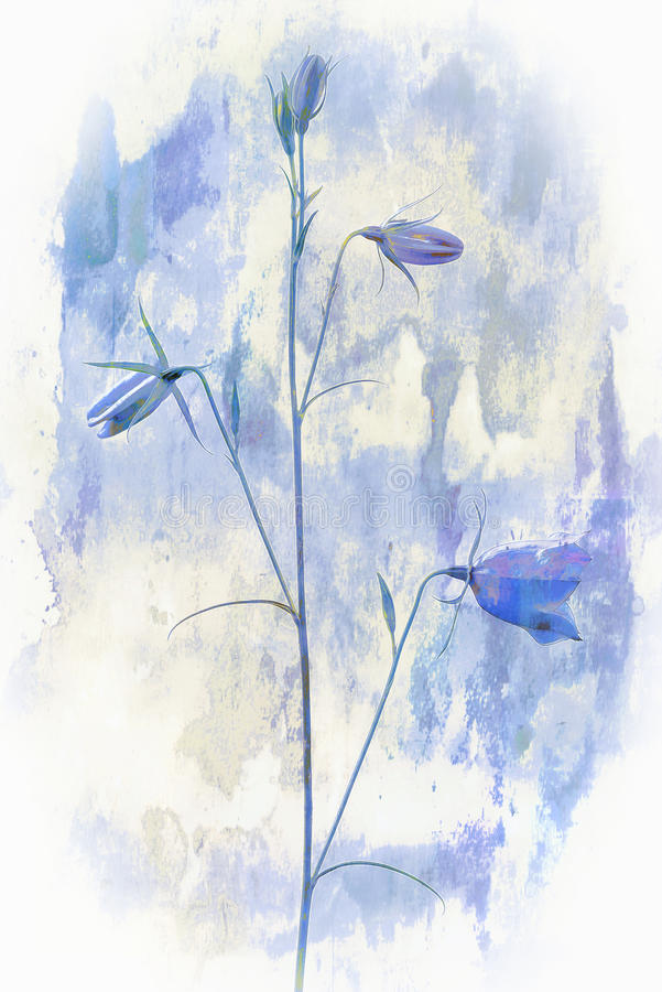 Bellflower in nature, digital painting royalty free stock image