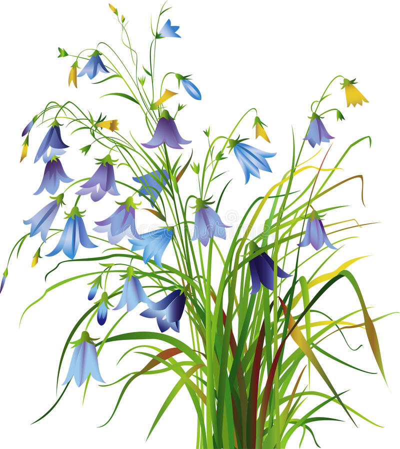 Bellflowers. Campanula wild flowers grass vector illustration