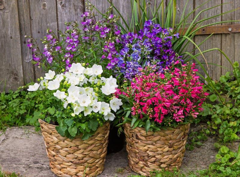 Bellflowers en Klokje als kleurrijke tuindecoratie stock afbeeldingen