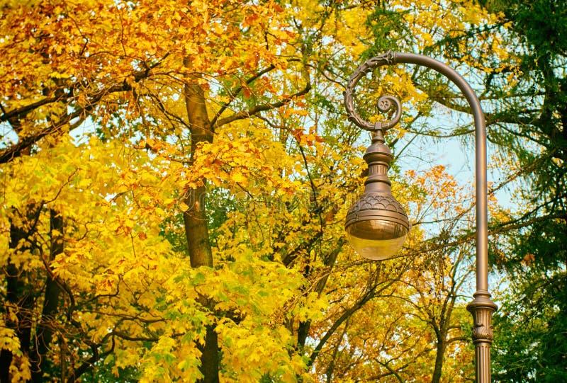 Bellissima lampada di strada sullo sfondo delle foglie d'autunno immagine stock