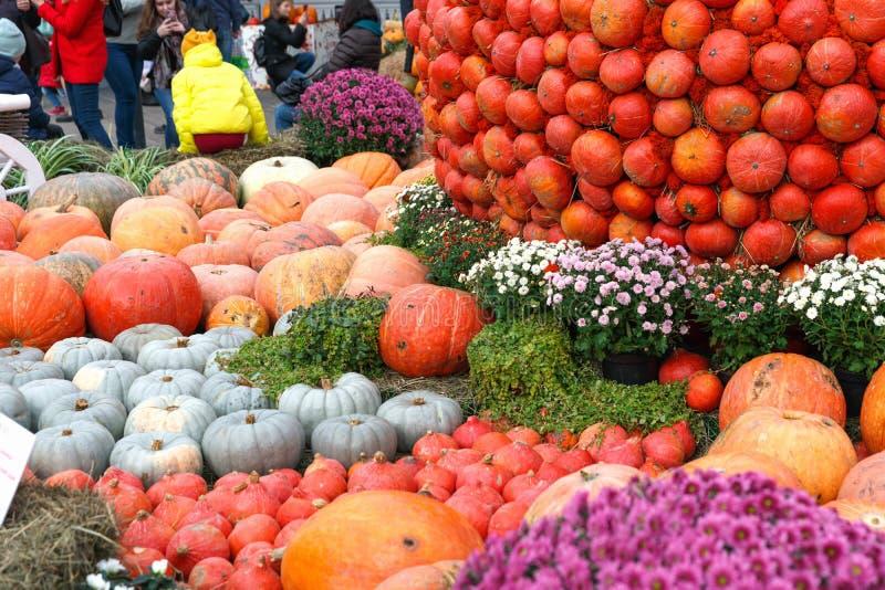 Bellissime zucche mature Festival del raccolto Coltivatori collettivi in autunno raccolgono favoloso fondo autunnale con zucche fotografia stock