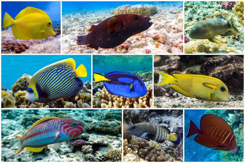 Bellissimi coralli tropicali, collage di coralli fotografia stock libera da diritti