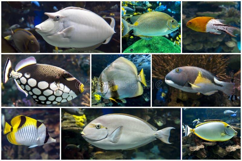 Bellissimi coralli tropicali, collage di coralli fotografie stock libere da diritti