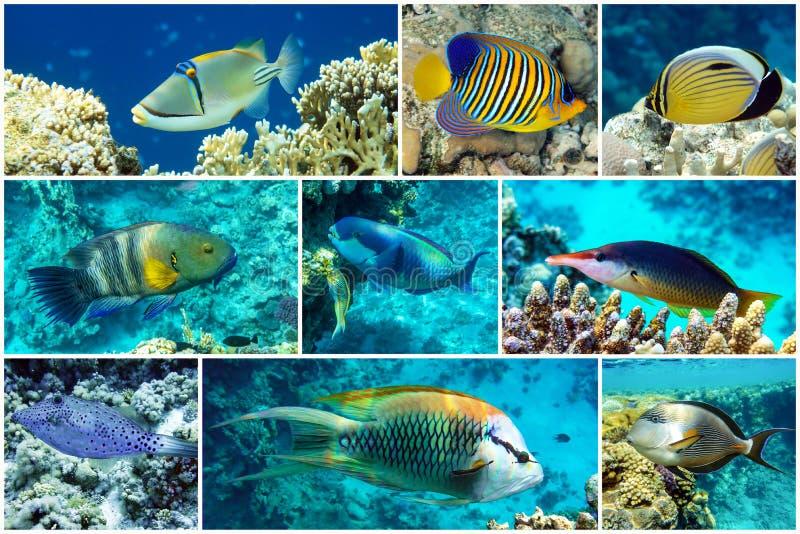 Bellissimi coralli tropicali, collage di coralli immagini stock