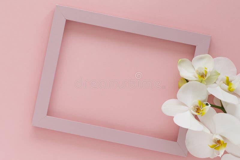 Bellissimi fiori di orchidea bianca, cornice di legno su sfondo rosa Orchidee di fiori e cornice rosa Spazio vuoto per il testo immagine stock libera da diritti