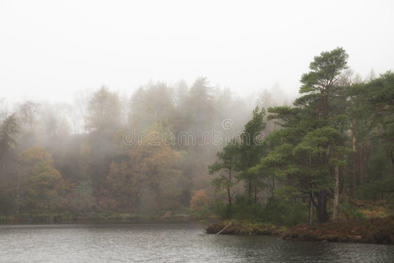 Bellissimo moderno paesaggio autunnale di bosco e lago con nebbia alla nebbia durante la mattina presto fotografia stock libera da diritti