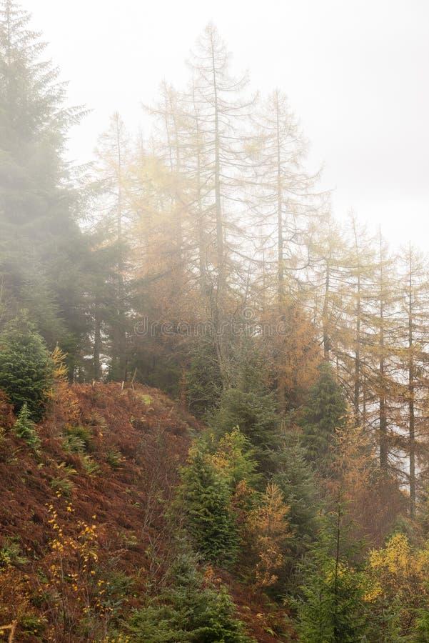 Bellissimo paesaggio autunnale autunnale dell'albero d'arco e della foresta di pini nel distretto del lago fotografia stock