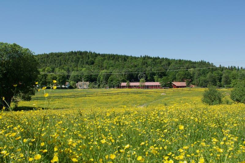 Bellissimo paesaggio a Lerum, Svezia fotografie stock libere da diritti