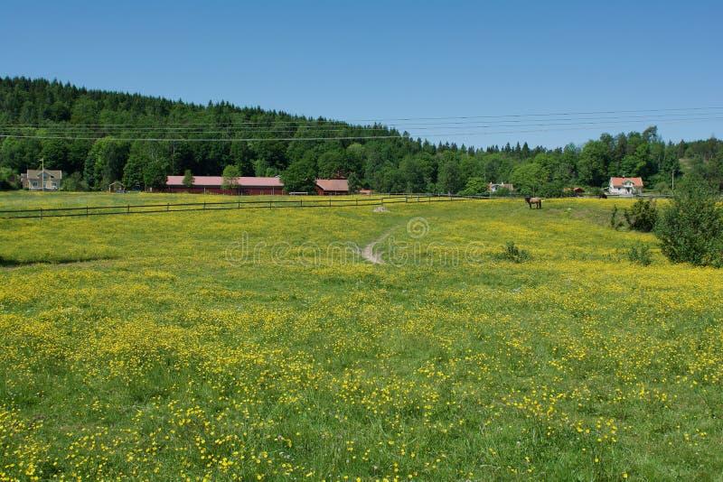 Bellissimo paesaggio a Lerum, Svezia fotografia stock libera da diritti