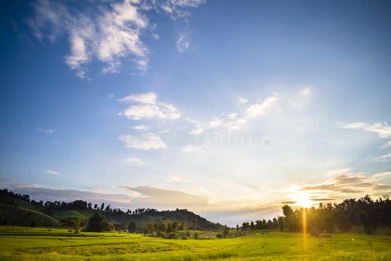 Bellissimo paesaggio in un campo giallo con alcune nuvole sopra il cielo blu Thailandia - l'agricoltura nel nord della Thailandia fotografia stock libera da diritti