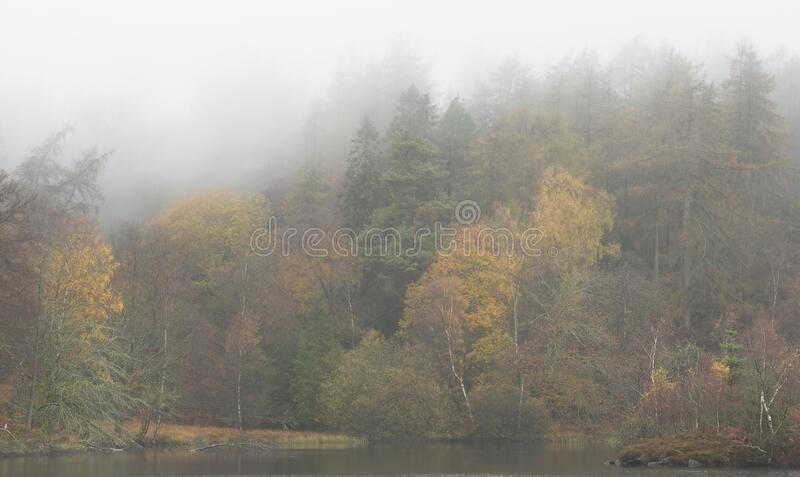 Bellissimo stile Autunno paesaggio di boschi con nebbia nebbia al mattino presto fotografia stock